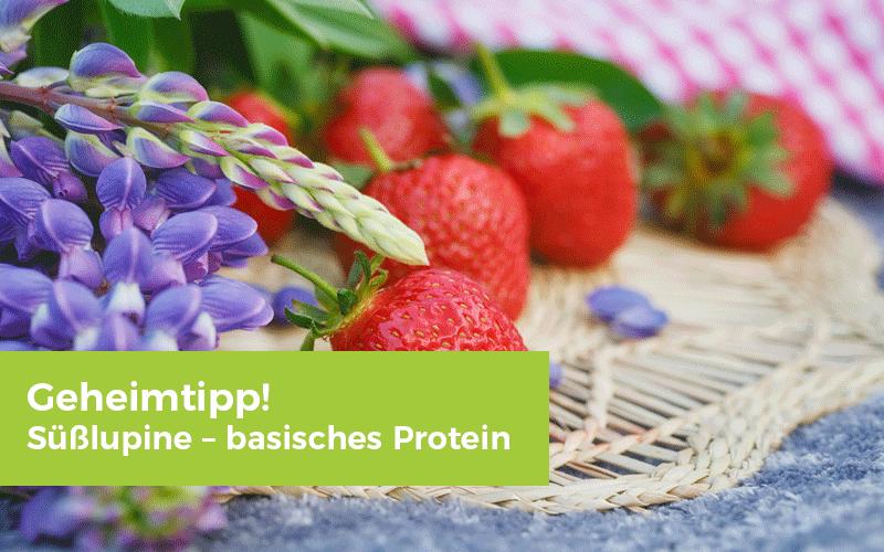 Geheimtipp! Süßlupine – basisches Protein